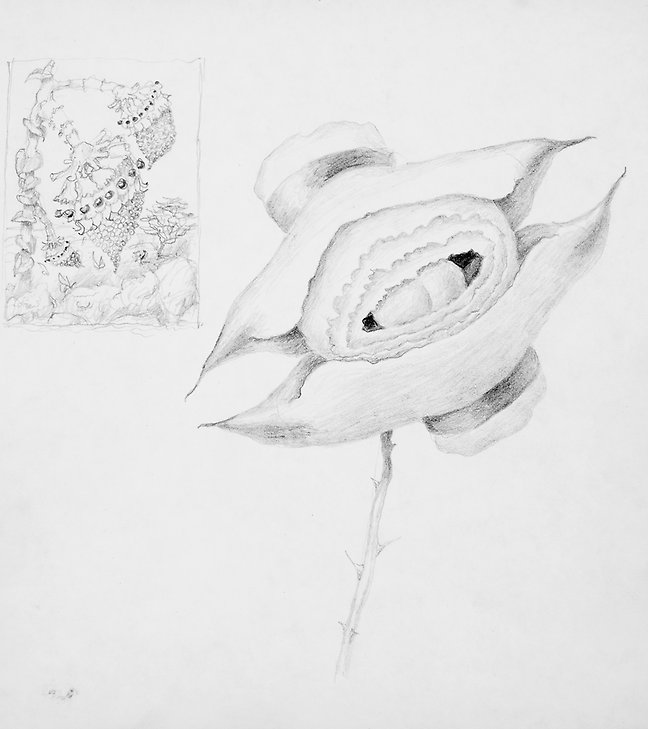 Drawing  1971  graphite on paper  185 x 207 mm