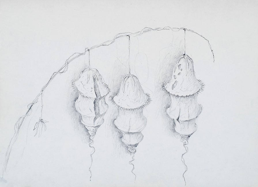 Drawing  1973  graphite on paper  202 x 147 mm